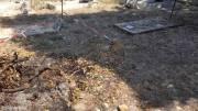 Le-immagini-dei-rifiuti-bruciati-sulle-tombe-al-cimitero-di-Termini-Imerese