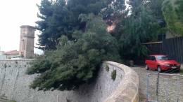 06-03-2013-cade-un-albero-al-tribunale-di-termini