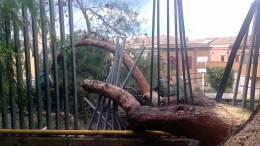 06-03-2013-nuove-immagini-albero-tribunale